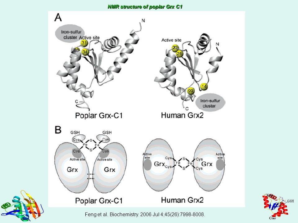 Feng et al. Biochemistry. 2006 Jul 4;45(26):7998-8008. Nter Cter GSH C27 NMR structure of poplar Grx C1