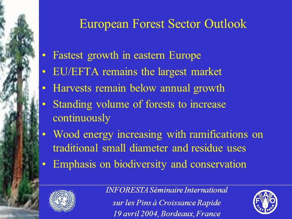 INFORESTA Séminaire International sur les Pins à Croissance Rapide 19 avril 2004, Bordeaux, France European Forest Sector Outlook Fastest growth in eastern Europe EU/EFTA remains the largest market Harvests remain below annual growth Standing volume of forests to increase continuously Wood energy increasing with ramifications on traditional small diameter and residue uses Emphasis on biodiversity and conservation