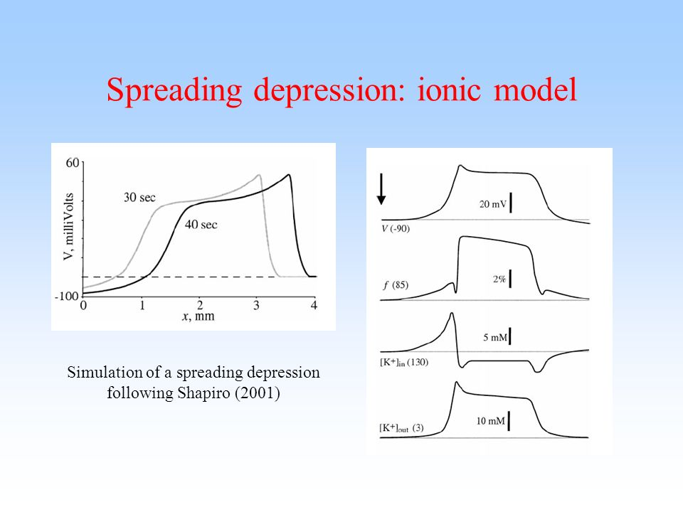 Spreading depression: ionic model Simulation of a spreading depression following Shapiro (2001)