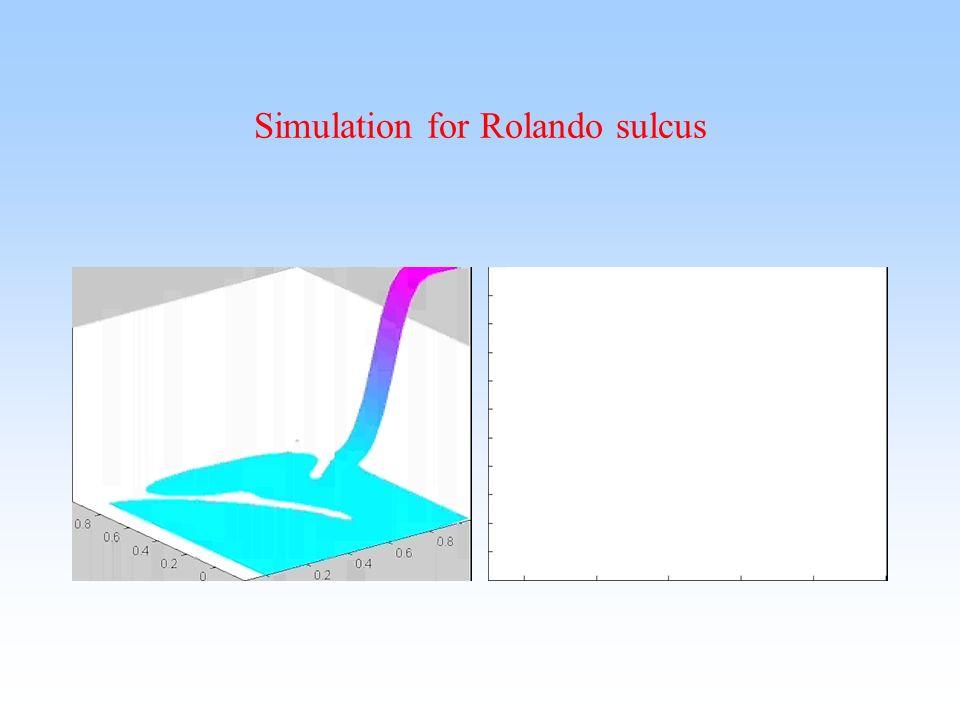 Simulation for Rolando sulcus