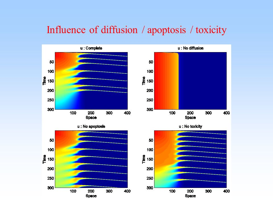 Influence of diffusion / apoptosis / toxicity