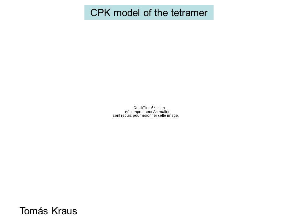 CPK model of the tetramer Tomás Kraus