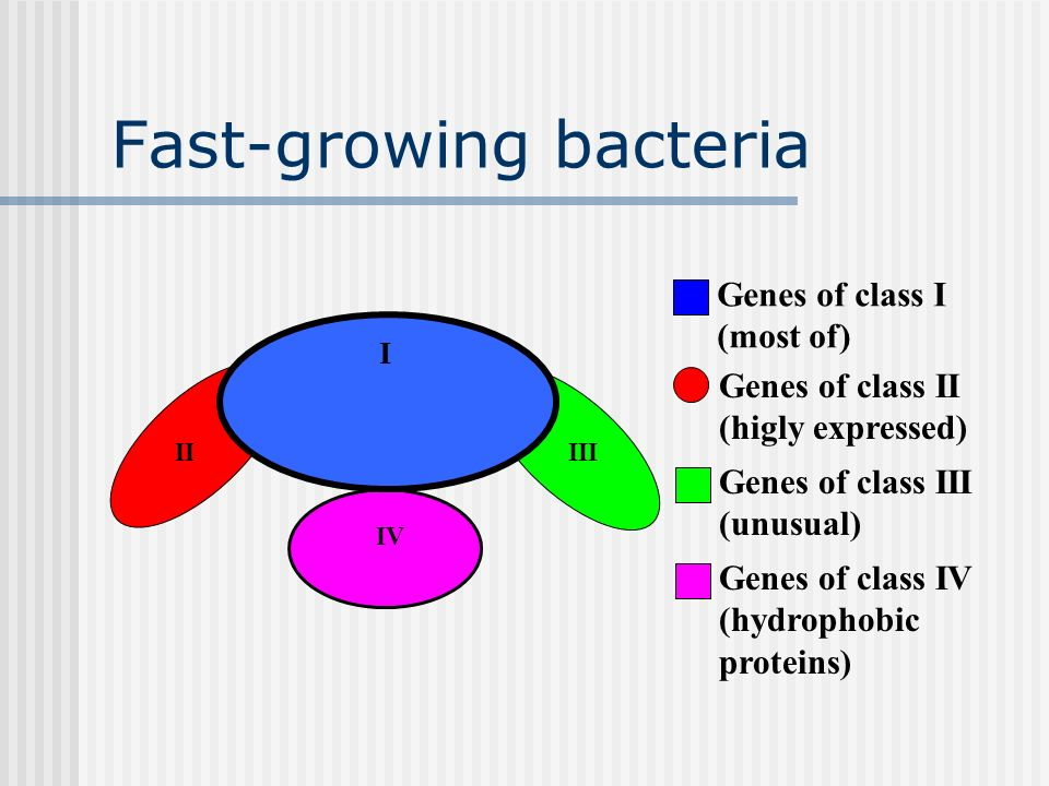 Fast-growing bacteria IV II I III Genes of class I (most of) Genes of class II (higly expressed) Genes of class III (unusual) Genes of class IV (hydro