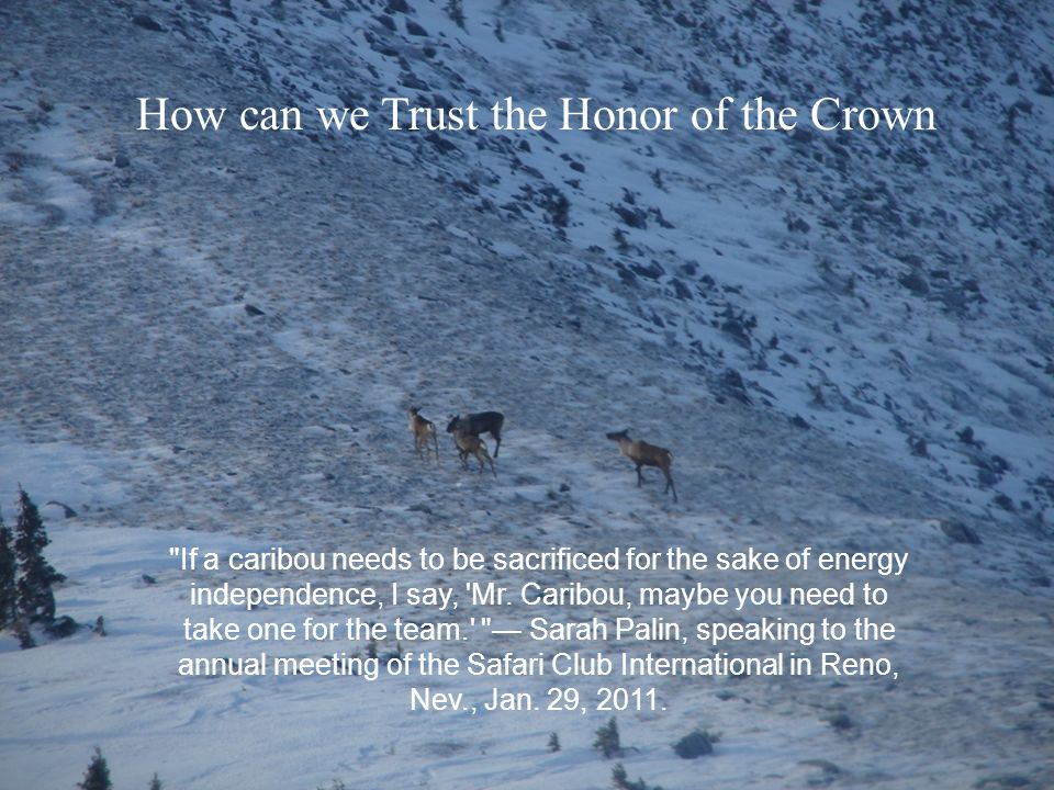 If a caribou needs to be sacrificed for the sake of energy independence, I say, Mr.