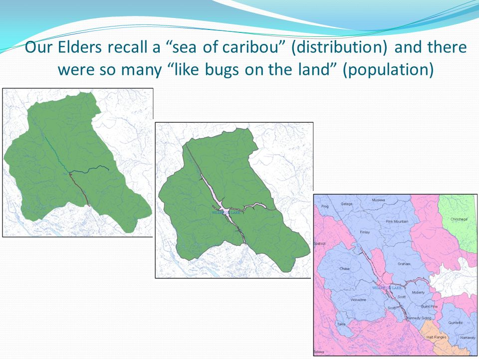 Our Elders recall a sea of caribou (distribution) and there were so many like bugs on the land (population)