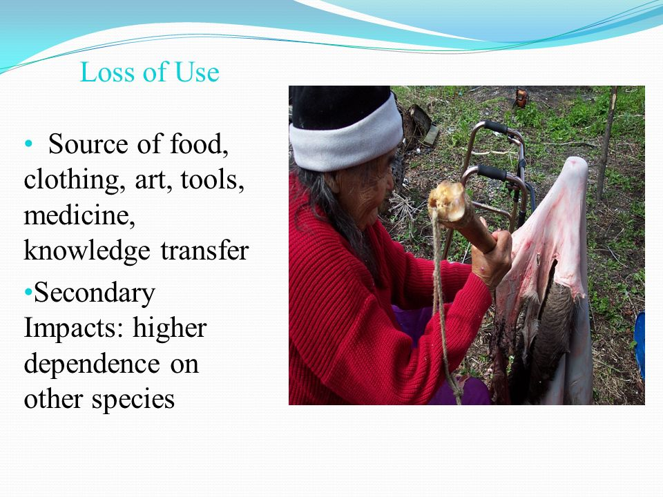 Loss of Use Source of food, clothing, art, tools, medicine, knowledge transfer Secondary Impacts: higher dependence on other species