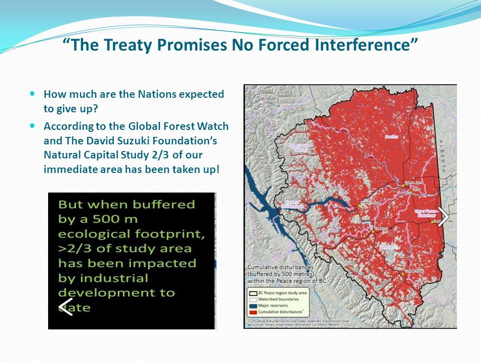 The Treaty Promises No Forced Interference How much are the Nations expected to give up? According to the Global Forest Watch and The David Suzuki Fou