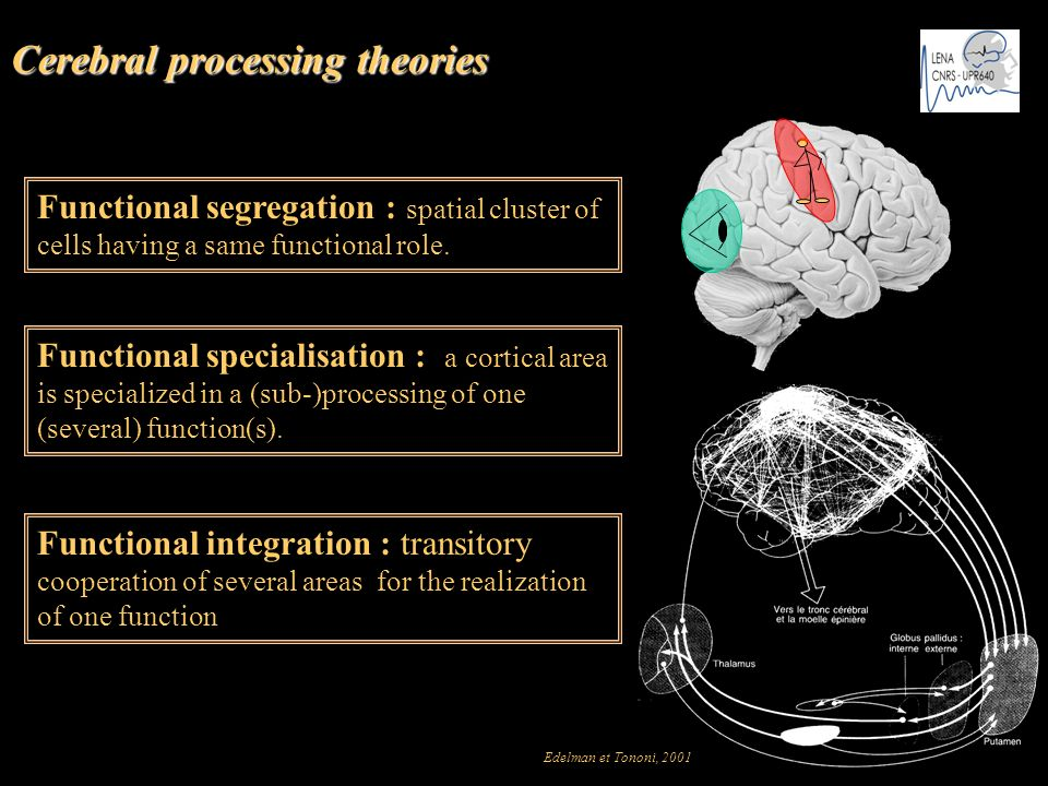 Cerebral processing theories Functional segregation : spatial cluster of cells having a same functional role. Functional specialisation : a cortical a
