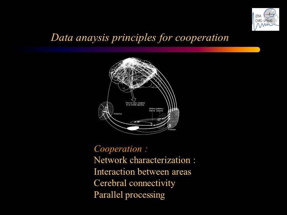 Cooperation : Network characterization : Interaction between areas Cerebral connectivity Parallel processing Data anaysis principles for cooperation