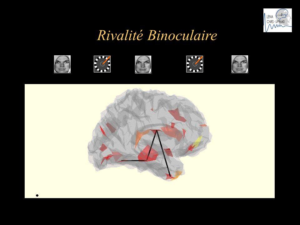 t …...…… Rivalité Binoculaire Cosmelli et al