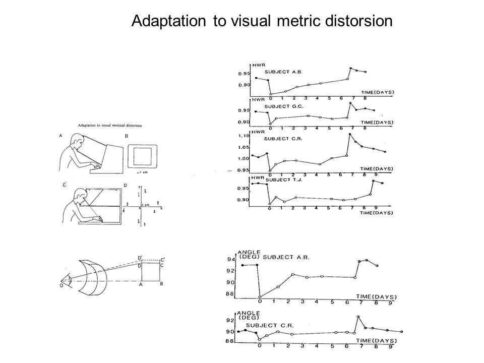 Adaptation to visual metric distorsion