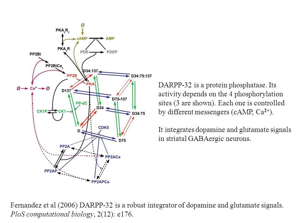 Fernandez et al (2006) DARPP-32 is a robust integrator of dopamine and glutamate signals. PloS computational biology, 2(12): e176. DARPP-32 is a prote