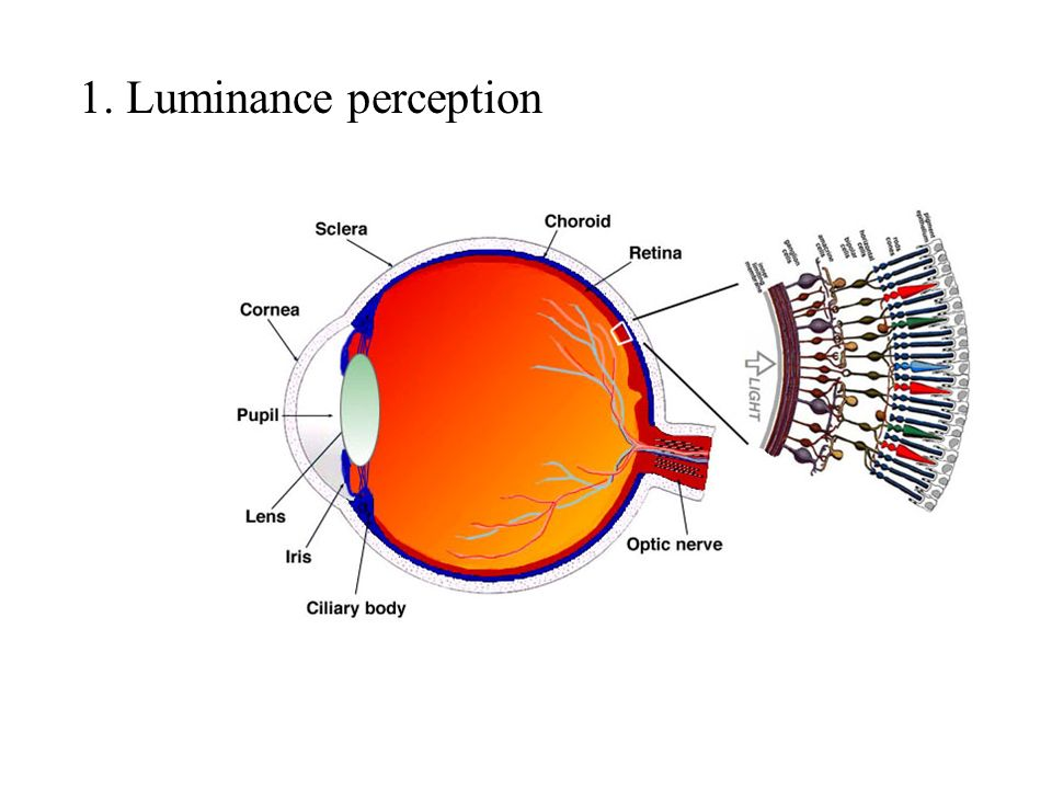 1. Luminance perception