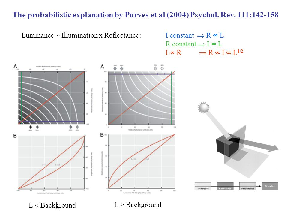 The probabilistic explanation by Purves et al (2004) Psychol. Rev. 111:142-158 L < Background L > Background L Luminance ~ Illumination x Reflectance: