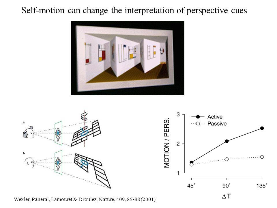 Self-motion can change the interpretation of perspective cues Wexler, Panerai, Lamouret & Droulez, Nature, 409, 85-88 (2001)