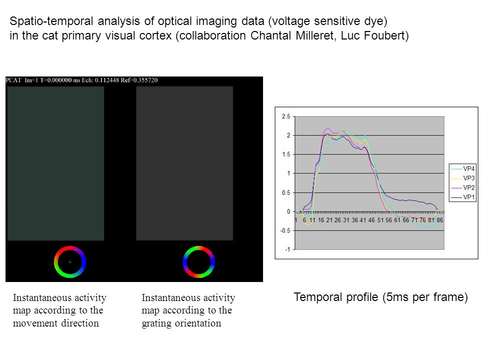 Spatio-temporal analysis of optical imaging data (voltage sensitive dye) in the cat primary visual cortex (collaboration Chantal Milleret, Luc Foubert) Instantaneous activity map according to the movement direction Instantaneous activity map according to the grating orientation Temporal profile (5ms per frame)