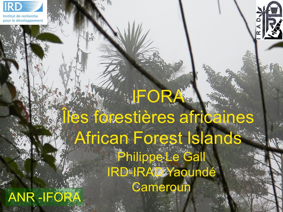 IFORA Îles forestières africaines African Forest Islands Philippe Le Gall IRD-IRAD Yaoundé Cameroun ANR -IFORA