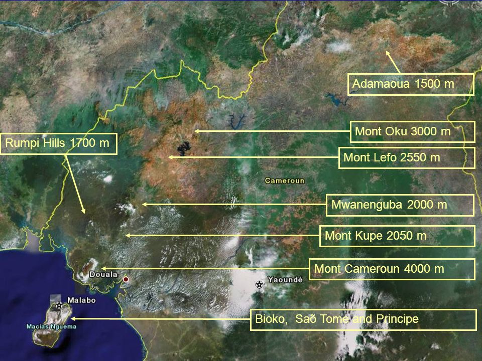 Bioko, Saõ Tome and PrincipeMont Cameroun 4000 mMont Lefo 2550 mMont Kupe 2050 mMont Oku 3000 mRumpi Hills 1700 mMwanenguba 2000 m Adamaoua 1500 m