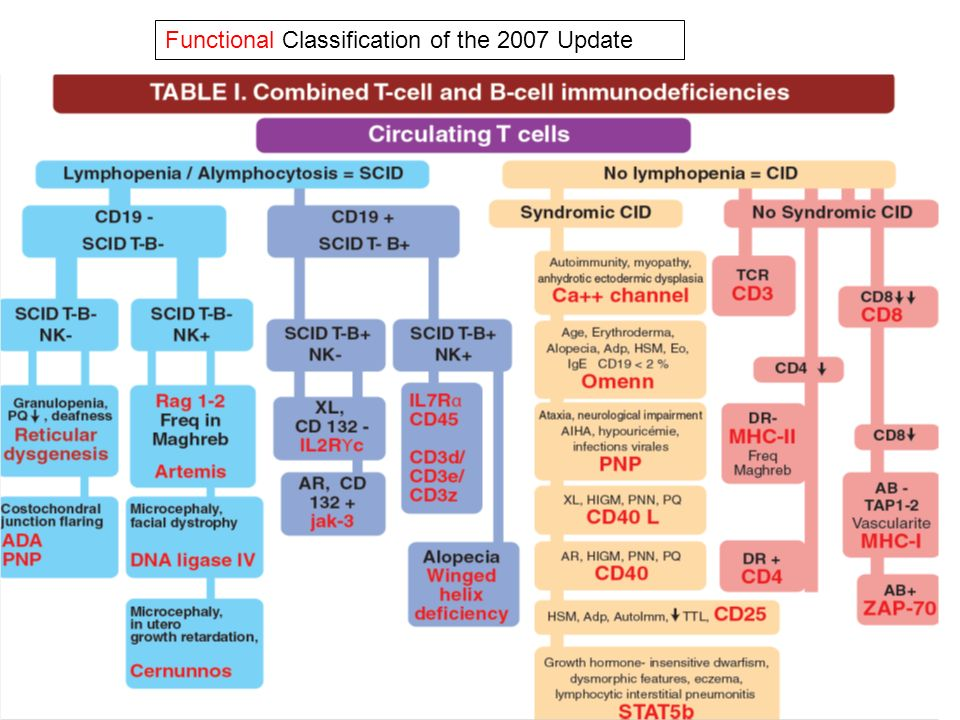 Functional Classification of the 2007 Update