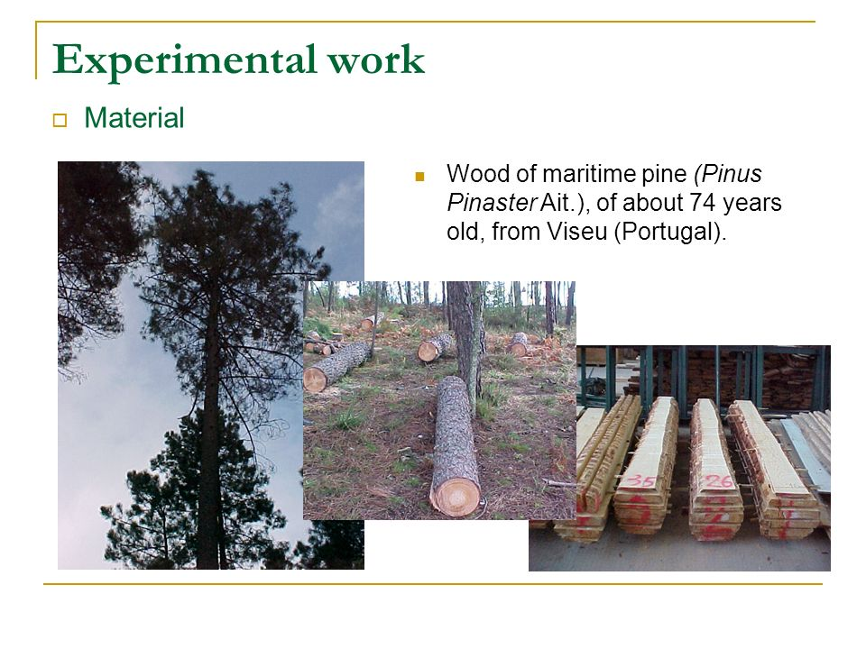 Experimental work Material Wood of maritime pine (Pinus Pinaster Ait.), of about 74 years old, from Viseu (Portugal).