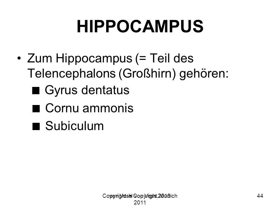 Copyright H von Voss, Munich 2011 HIPPOCAMPUS Zum Hippocampus (= Teil des Telencephalons (Großhirn) gehören: Gyrus dentatus Cornu ammonis Subiculum vo