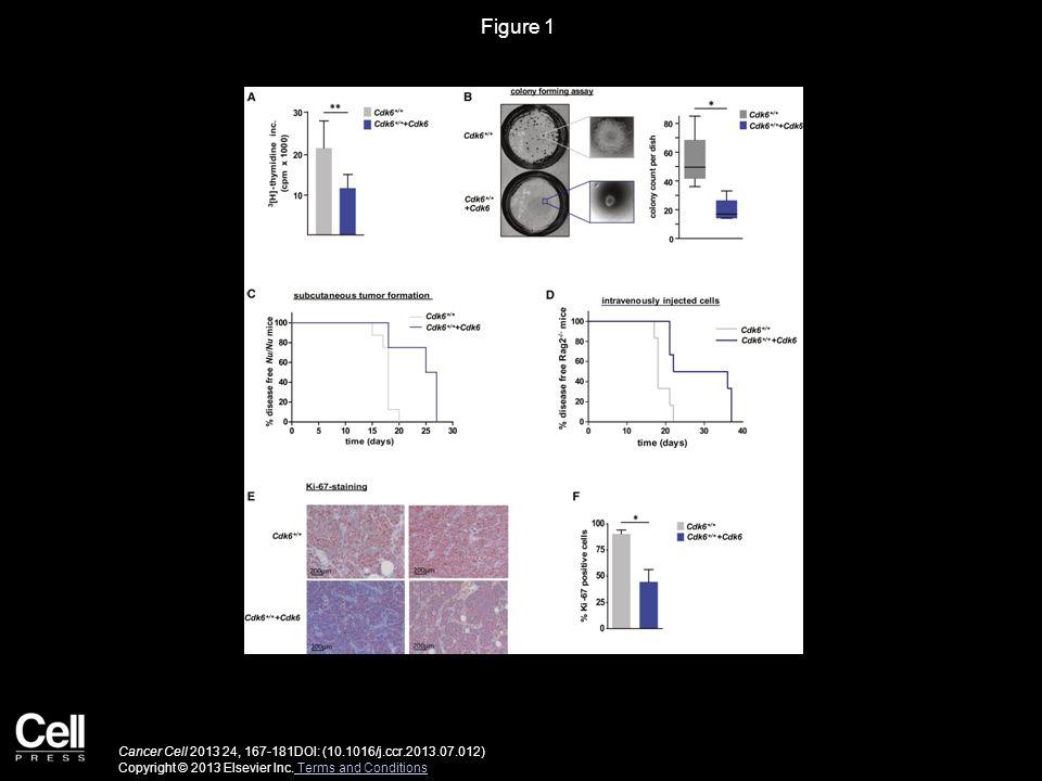 Figure 1 Cancer Cell 2013 24, 167-181DOI: (10.1016/j.ccr.2013.07.012) Copyright © 2013 Elsevier Inc. Terms and Conditions Terms and Conditions