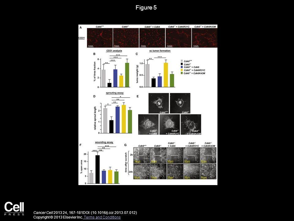Figure 5 Cancer Cell 2013 24, 167-181DOI: (10.1016/j.ccr.2013.07.012) Copyright © 2013 Elsevier Inc. Terms and Conditions Terms and Conditions