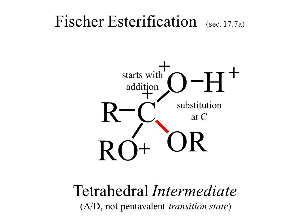 OH RC O Fischer Esterification (sec. 17.7a) H + H + + RO H + Tetrahedral Intermediate (A/D, not pentavalent transition state) substitution at C OR sta