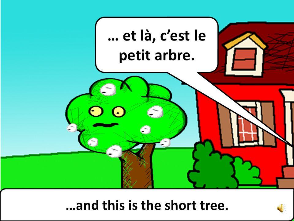 …and this is the short tree. … et là, cest le petit arbre.