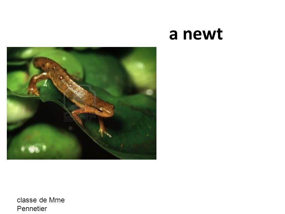 classe de Mme Pennetier a newt
