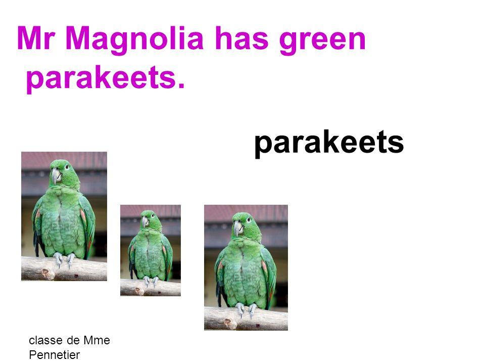 classe de Mme Pennetier parakeets Mr Magnolia has green parakeets.