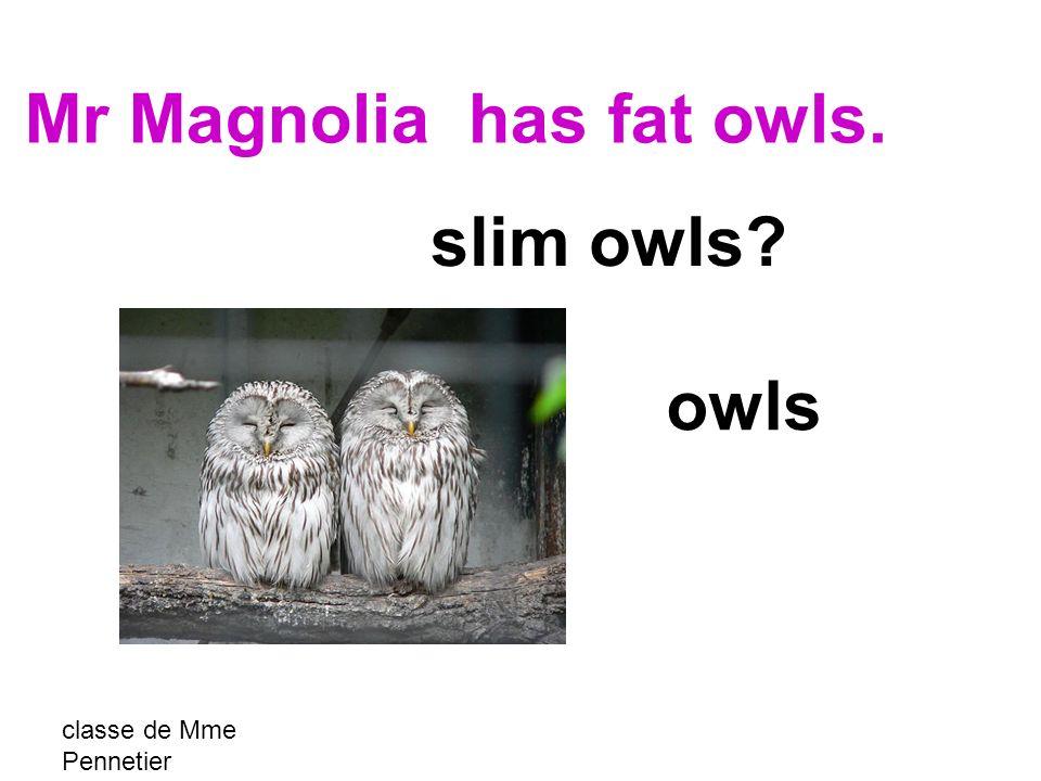 classe de Mme Pennetier owls slim owls Mr Magnolia has fat owls.