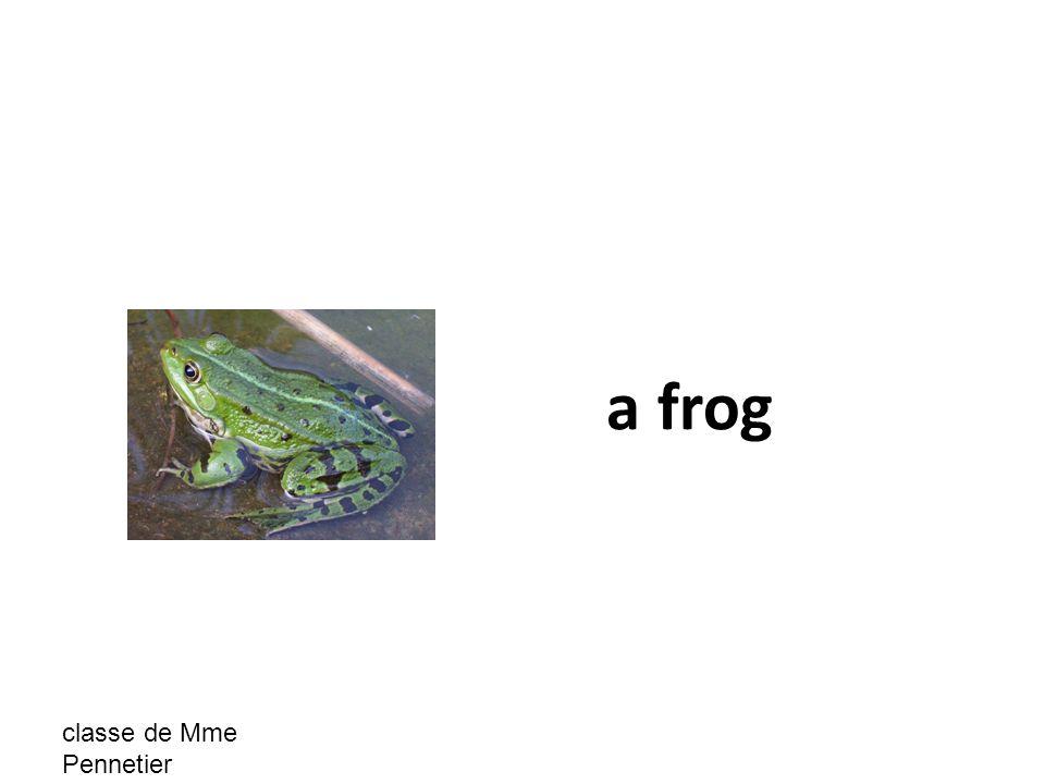 classe de Mme Pennetier a frog