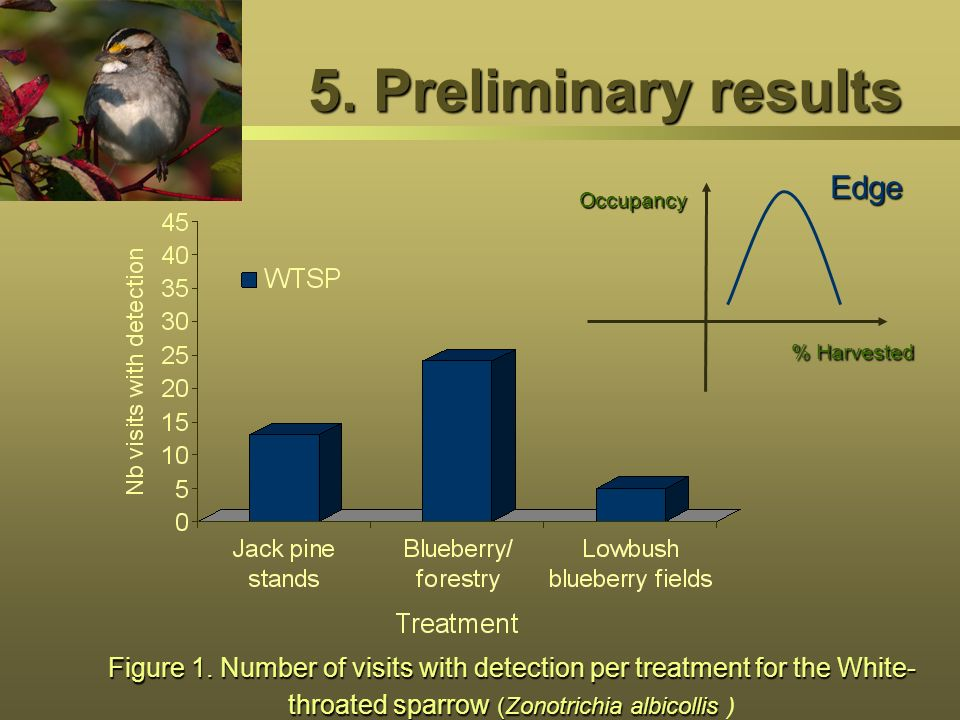 5. Preliminary results Figure 1. Number of visits with detection per treatment for the White- throated sparrow (Zonotrichia albicollis Figure 1. Numbe