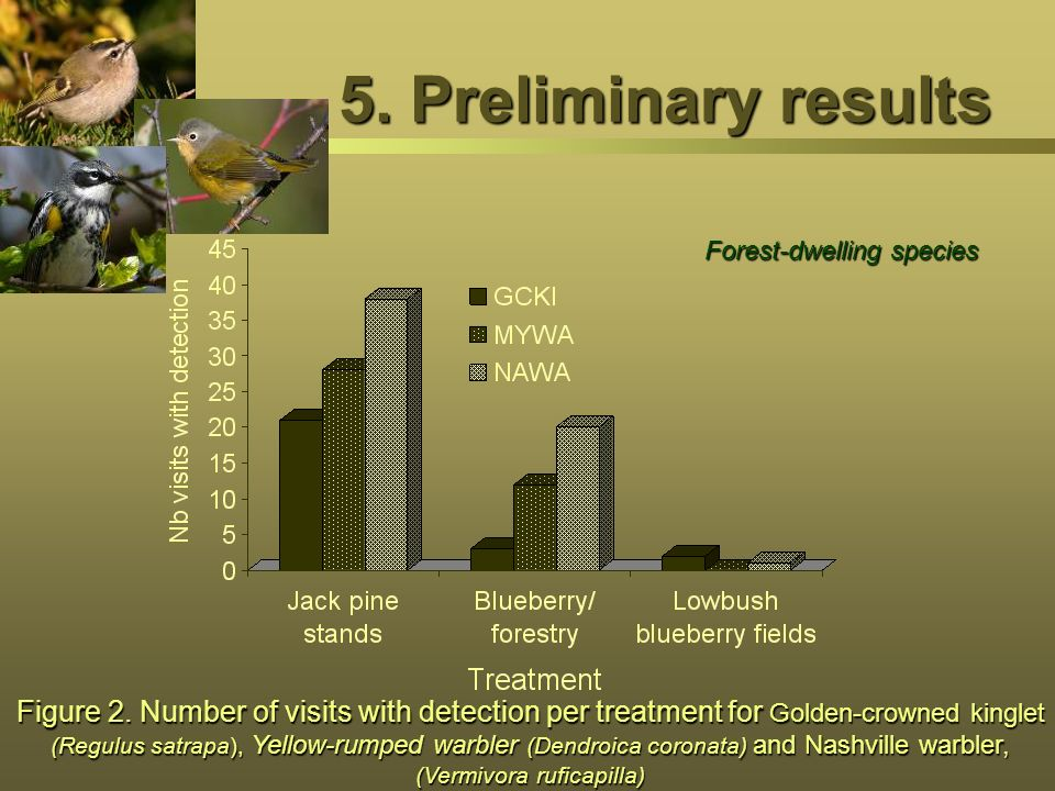 5. Preliminary results Figure 2. Number of visits with detection per treatment for Golden-crowned kinglet (Regulus satrapa), Yellow-rumped warbler (De