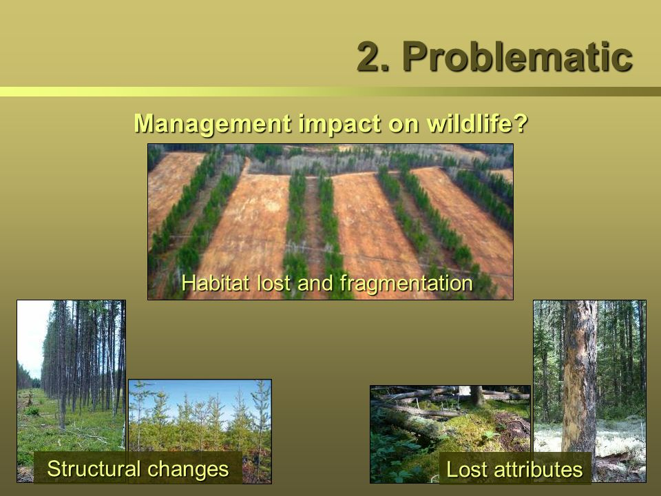 Management impact on wildlife? 2. Problematic Habitat lost and fragmentation Lost attributes Structural changes