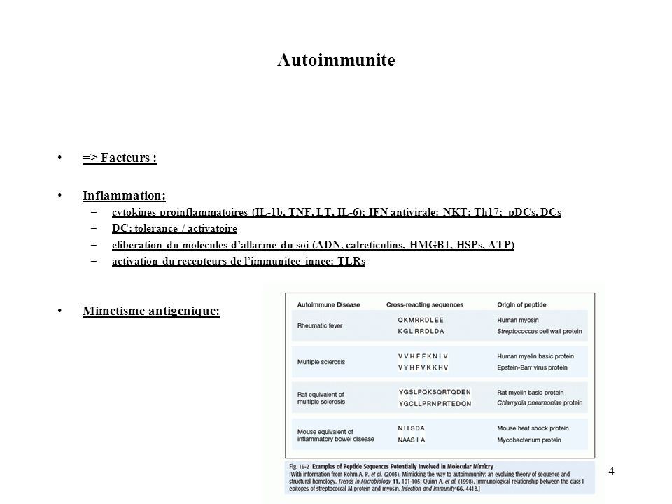 14 Autoimmunite => Facteurs : Inflammation: –cytokines proinflammatoires (IL-1b, TNF, LT, IL-6); IFN antivirale: NKT; Th17; pDCs, DCs –DC: tolerance /