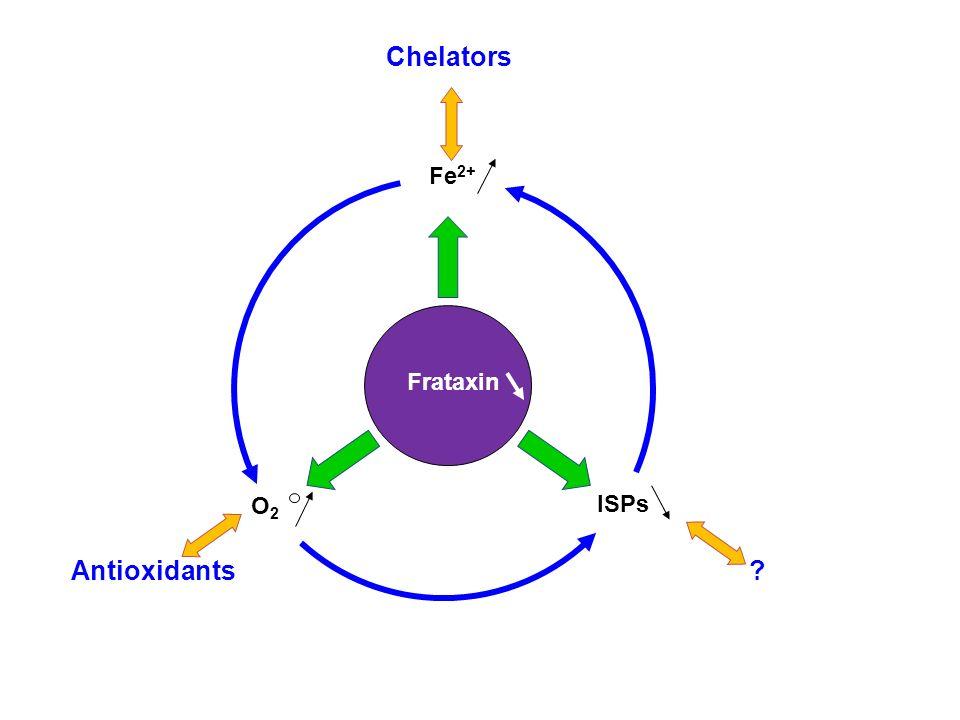 Antioxidants Chelators ? Fe 2+ O2O2 ISPs Frataxin