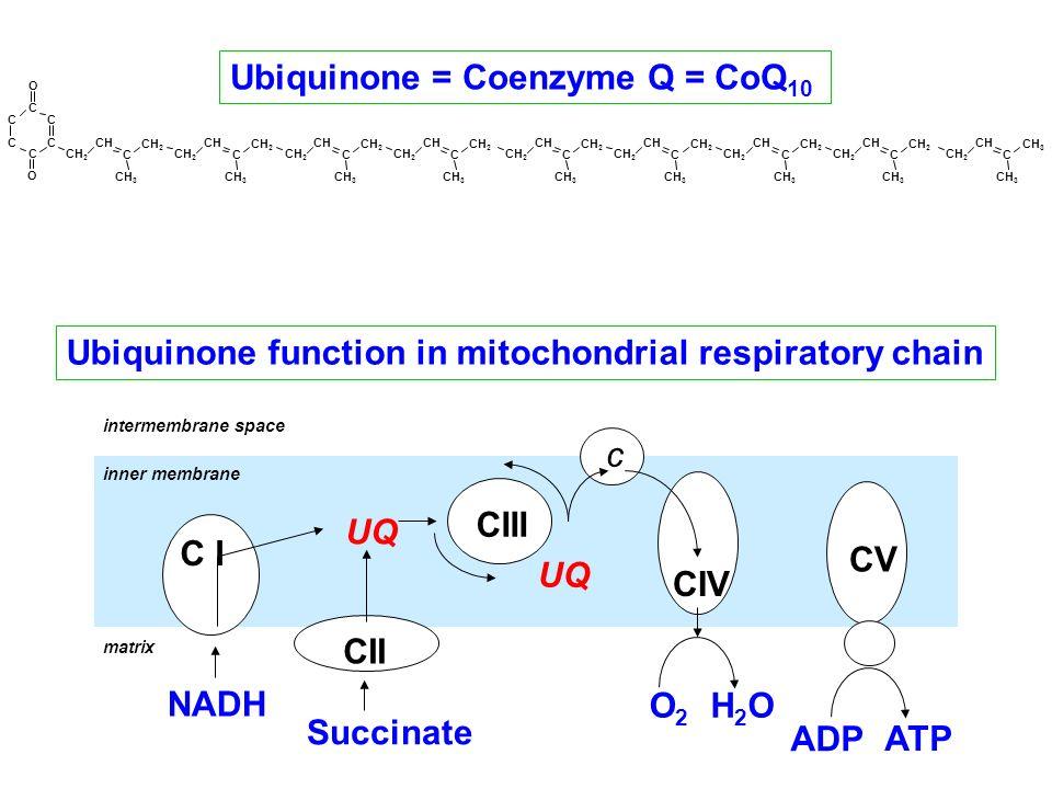 Ubiquinone function in mitochondrial respiratory chain Ubiquinone = Coenzyme Q = CoQ 10 UQ C I CII CIII CIV c Succinate O2O2 CV NADH ADP ATP H2OH2O in
