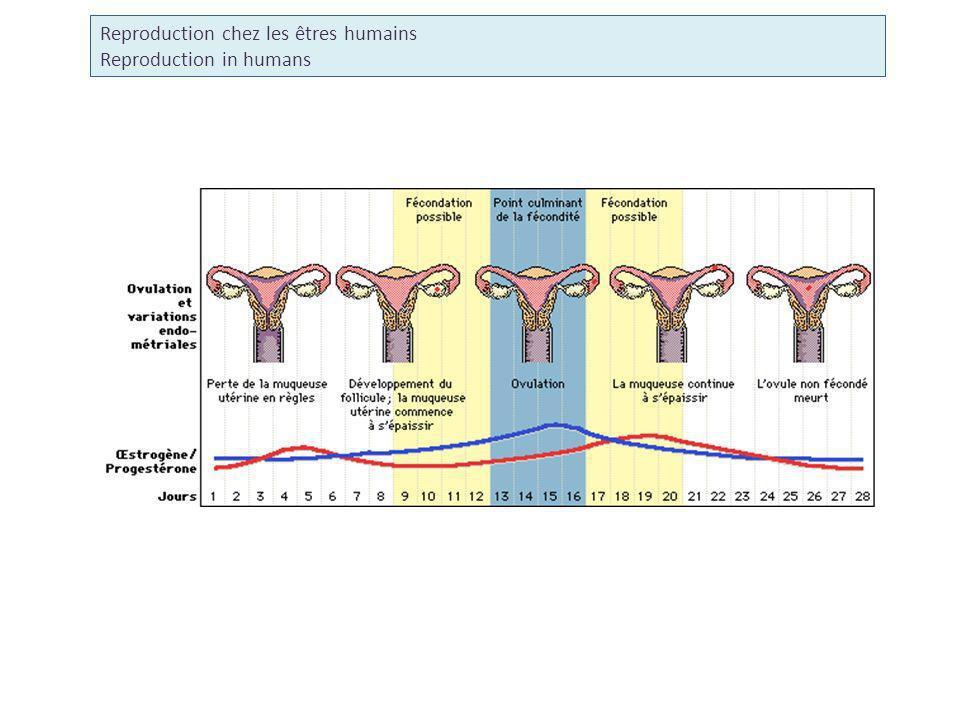 Reproduction chez les êtres humains Reproduction in humans