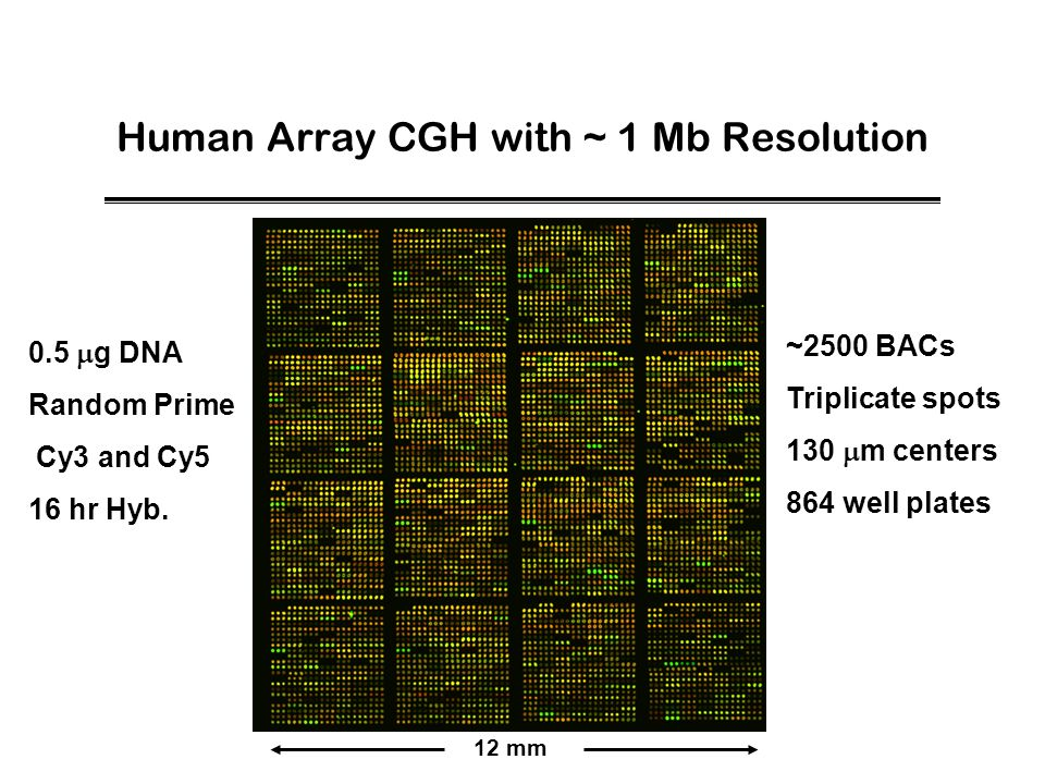 Human Array CGH with ~ 1 Mb Resolution ~2500 BACs Triplicate spots 130 m centers 864 well plates 0.5 g DNA Random Prime Cy3 and Cy5 16 hr Hyb. 12 mm