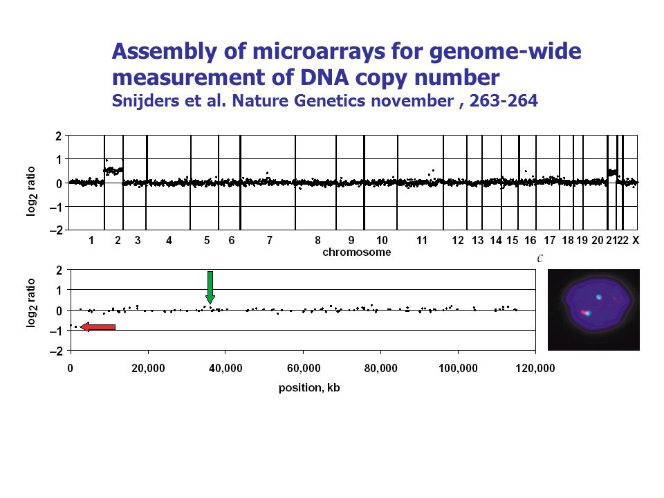 Assembly of microarrays for genome-wide measurement of DNA copy number Snijders et al. Nature Genetics november, 263-264