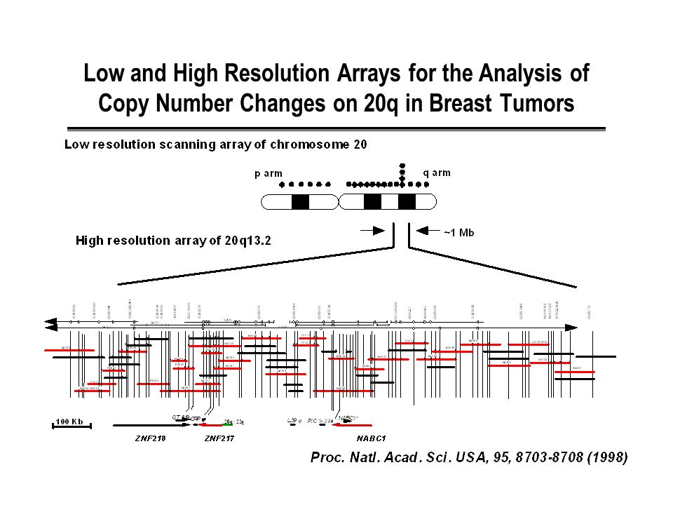 Low and High Resolution Arrays for the Analysis of Copy Number Changes on 20q in Breast Tumors