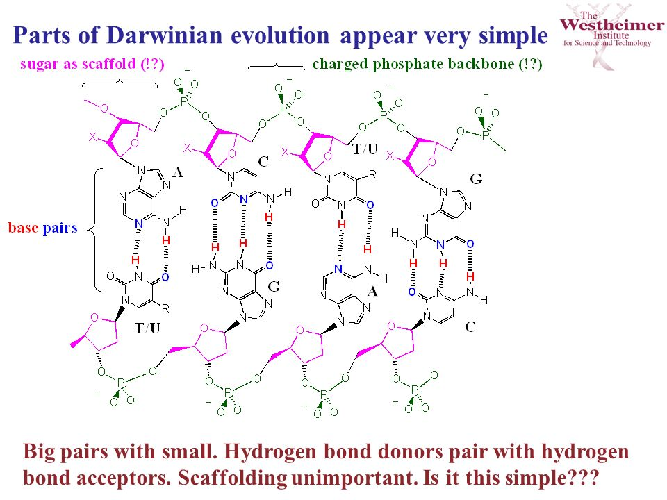 Parts of Darwinian evolution appear very simple Big pairs with small.