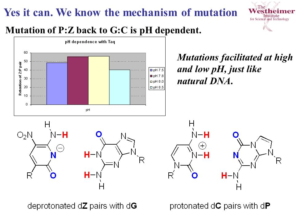 Yes it can. We know the mechanism of mutation Mutation of P:Z back to G:C is pH dependent.