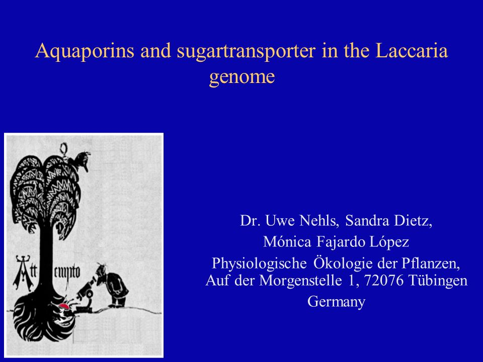 Aquaporins and sugartransporter in the Laccaria genome Dr.