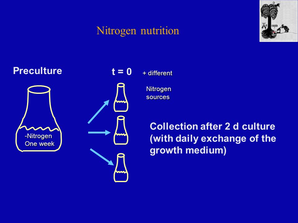 Nitrogen nutrition -Nitrogen One week + different Nitrogen Nitrogen sources sources Preculture t = 0 Collection after 2 d culture (with daily exchange of the growth medium)