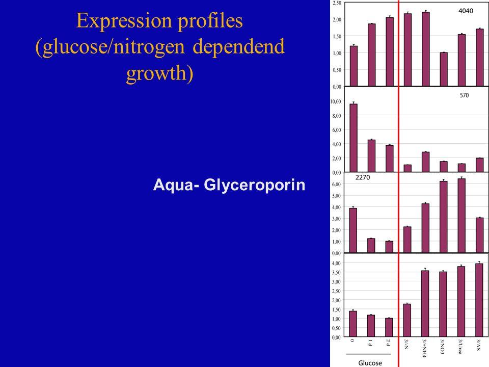 Expression profiles (glucose/nitrogen dependend growth) Aqua- Glyceroporin