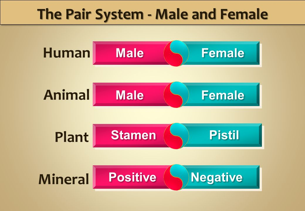 Human Female Male Animal Plant Mineral Male Female Stamen Pistil Negative Positive