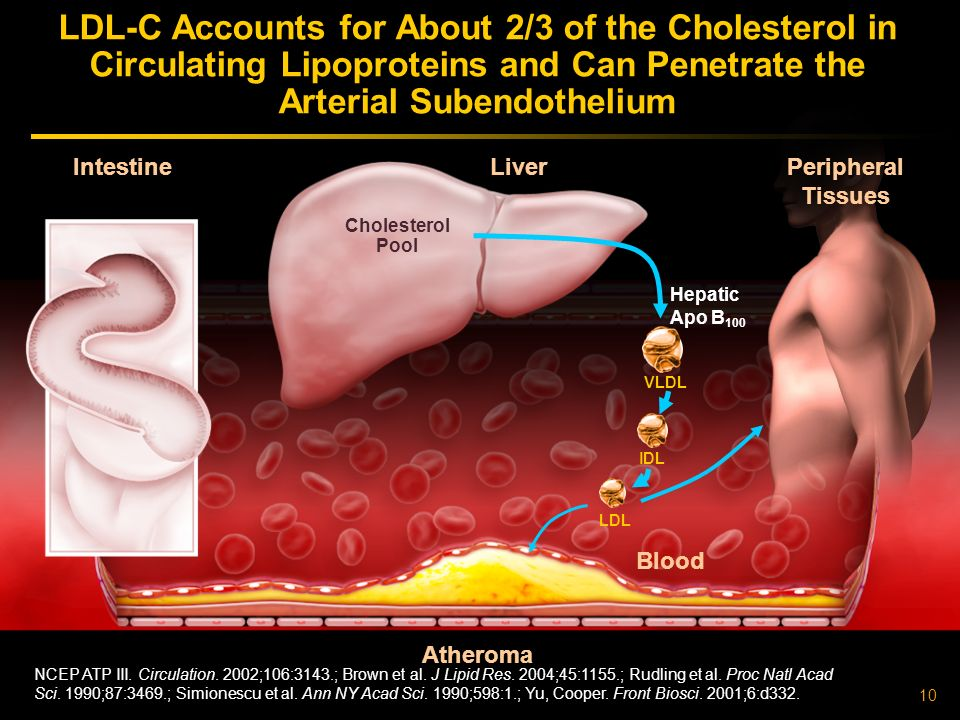 10 Atheroma Liver Intestine LDL-C Accounts for About 2/3 of the Cholesterol in Circulating Lipoproteins and Can Penetrate the Arterial Subendothelium Peripheral Tissues Hepatic Apo B 100 VLDL NCEP ATP III.